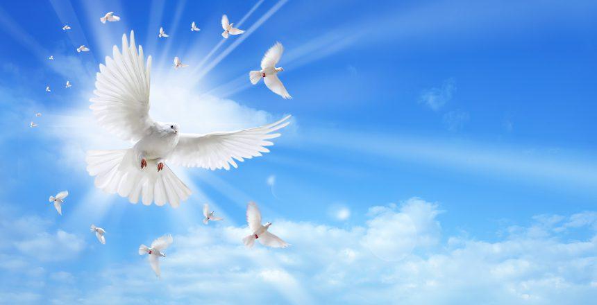 sky_white_bird
